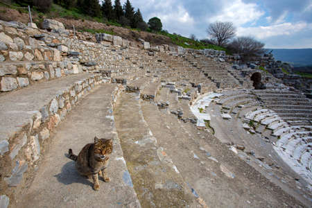 Ephesus historical ancient city and cat. Izmir / Turkey