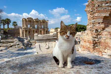 Ephesus historical ancient city and cat. Izmir / Turkey