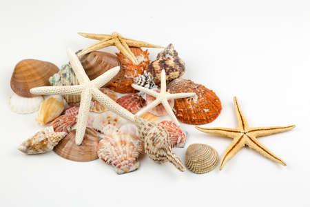 Various sea shells, concept, design, photo, background Zdjęcie Seryjne