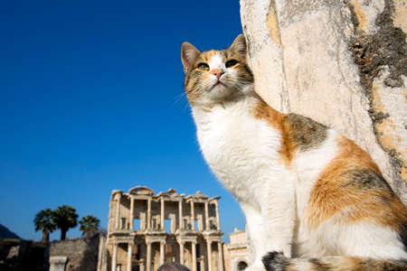 Turkey Izmir Ephesus Ancient City and cat 版權商用圖片