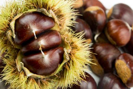 Ripe chestnuts close up. Raw Chestnuts for Christmas. Fresh sweet chestnut. Castanea sativa top wiew. Food background. Zdjęcie Seryjne
