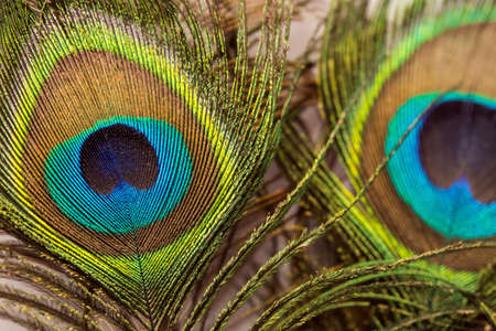 Beautiful exotic peacock feathers on white background with copy space. Stockfoto