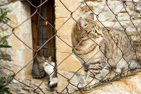 Stray cats. Turkey Mugla Datca stray cats.