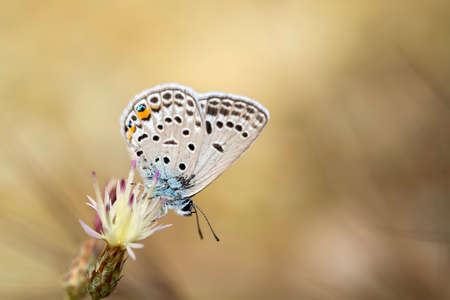 Beatiful butterfly on the various plant in nature.
