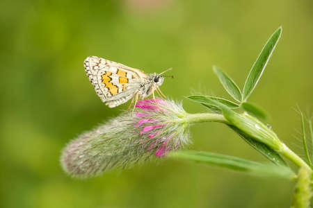 Beatiful butterfly on the flower in nature.