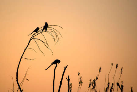 Sunset tree on the bird silhouette in nature