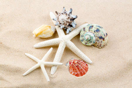 Starfishes, pearls, and amazing seashells close up