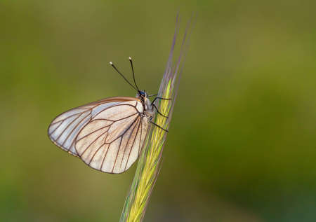 Natural life; butterfly in nature. Fauna / flora concept.