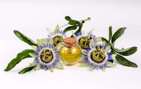Passiflora flower herb oil Banque d'images