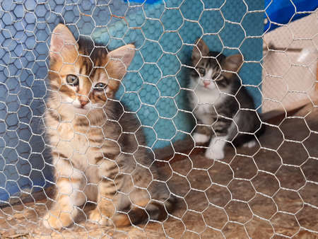 Animal shelter, street cat in cage