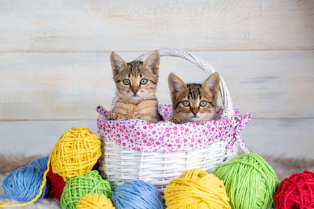 Cute kitten with colorful wool balls