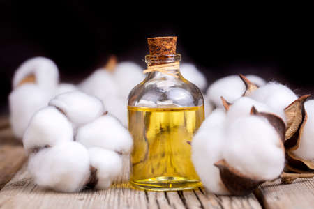 Cotton plant ball and cotton oil 免版税图像