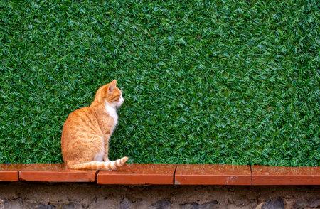 In orange color a cute stray cat