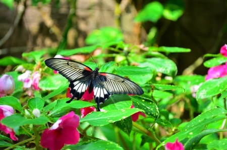 Butterfly House of Villa Garzoni in Collodi - Italy photo