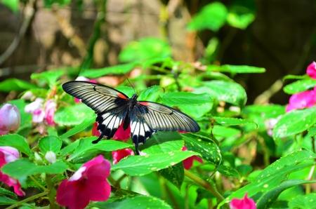 collodi: Butterfly House of Villa Garzoni in Collodi - Italy Stock Photo