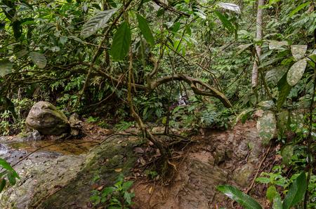 sumatra: National Park of Gunung Leuser in Northern Sumatra, Indonesia Stock Photo
