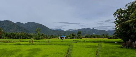 sumatra: Typical landscape with rice fields in Northern Sumatra, Indonesia