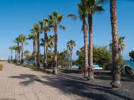 palm alley by atlantic ocean Stock Photo