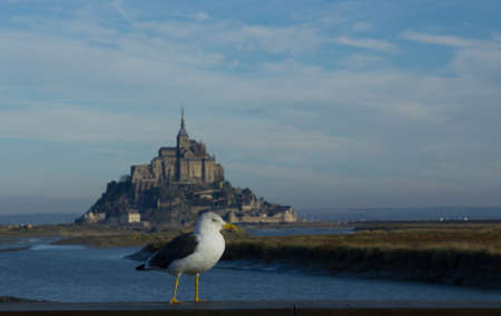 Seagull with Mont Saint Michel, France, in background photo
