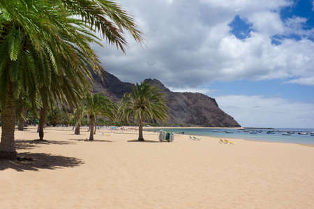 beautiful sand beach with palm trees on Tenerife photo