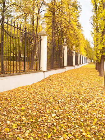 Autumn alley in classic park, Warsaw, Poland