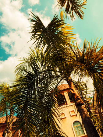 Tropical background with palm trees in sun light. Toned pastel effect Stock Photo