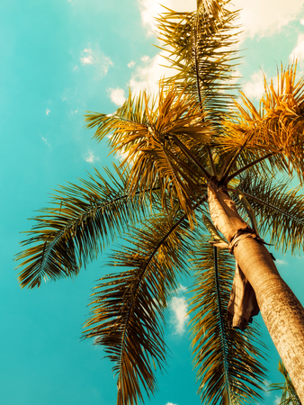 Palm tree against blue sky. Vintage toned. Nature landscape. Tropical background. View up Stock Photo