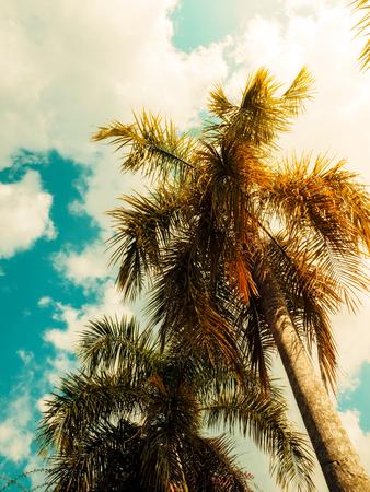 Tropical palms trees. Vintage toned. Nature landscape. Holiday travel design