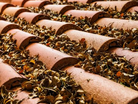 Tile roof with the fallen leaves on it. Shallow focus Stock Photo