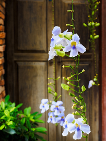 Blossomed flowers in front of wooden door. Shallow focus. Tropical holidays