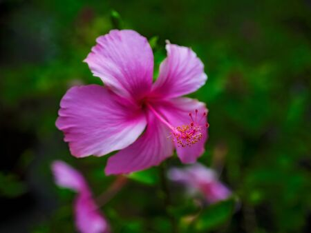 Blossomed flower on the blur background. Shallow focus. Tropical holidays