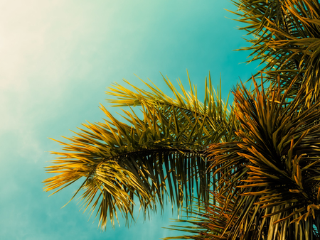Tropical palms tree. Vintage toned. Nature landscape. Holiday travel design