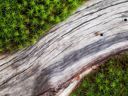 Close-up of tree root surrounded by grass