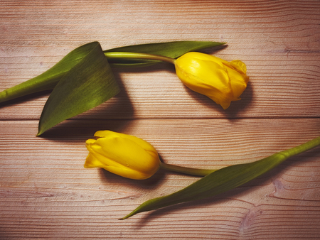 Two tulips on the wooden background. Pastel toned