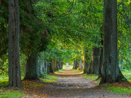 Alley of autumn woods in the park Stock Photo