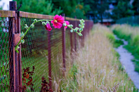 way to freedom: Flower making their way to freedom