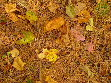 Foliage Floor