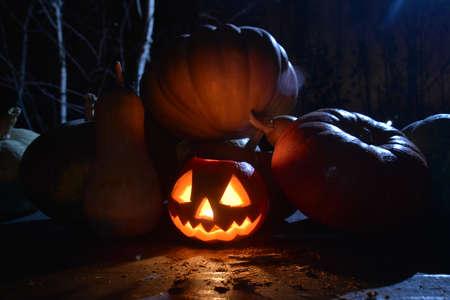 lots of pumpkins in dark forest. halloween pumpkin jack face with moonlight on top