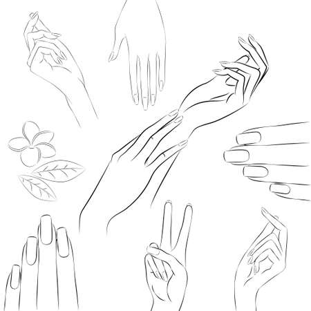 collection of hand drawn elegant womans hands in various gestures and frangipani, plumeria flower.
