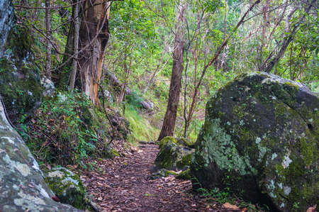 gondwana: Rainforest path. Lamington National park, Gondwana rainforest, Queensland, Australia. Hiking in tropical rain forest Stock Photo