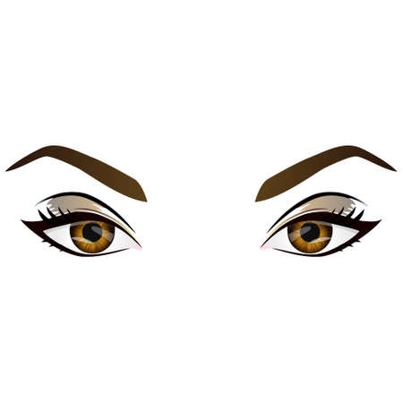 eyes close up: Realistic cartoon vector female brown eyes and eyebrows and fashion make up. Hazel eyes and brows design element, body parts isolated on white background. Eyes close up