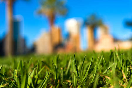 Green grass with blurred cityscape on the background. Green urban living concept. Shallow DOF, selective focus