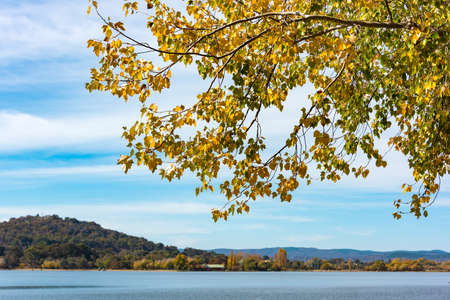 Canberra: Branch with yellow leaves and blue lake on the background. Bowen Park, Canberra, Australian Capital Territory, Australia. Selective focus on leaves, shallow DOF