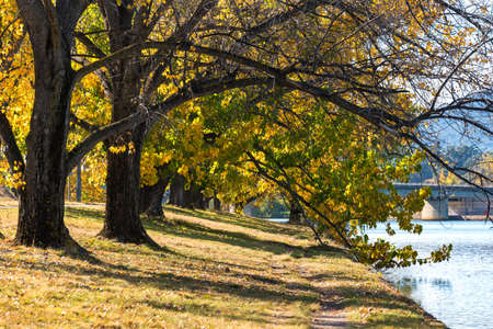 Canberra: Autumn in Barton Park, Canberra Stock Photo