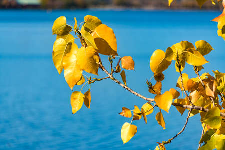 Autumn yellow leaves on blue water background