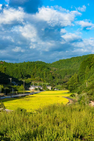 atmospheric: Rice field surrounded by forest. Rural agriculture landscape. Aichi prefecture, Japan