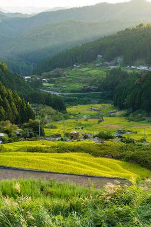 Beautiful rice terraces, paddy field in mountain forest. Yotsuya, Aichi, Japan