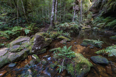 Picturesque forest pond along Grand Canyon Walking Track in Blue Mountains National Park. Australia Stock Photo