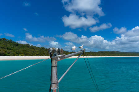 Yachts mast with pair of seagulls and beautiful tropical beach on the background. Whitehaven beach, Whitsundays, Queensland, Australia