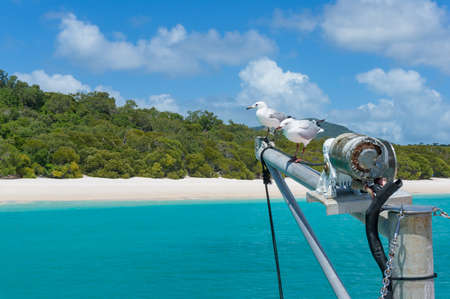 whitehaven beach: Yachts mast with pair of seagulls and beautiful tropical beach on the background. Whitehaven beach, Whitsundays, Queensland, Australia
